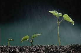 reino_semente